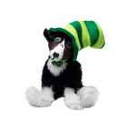 Annalee Irish Border Collie 2013